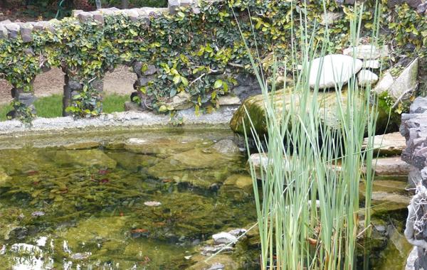 cara membuat kolam ikan koi