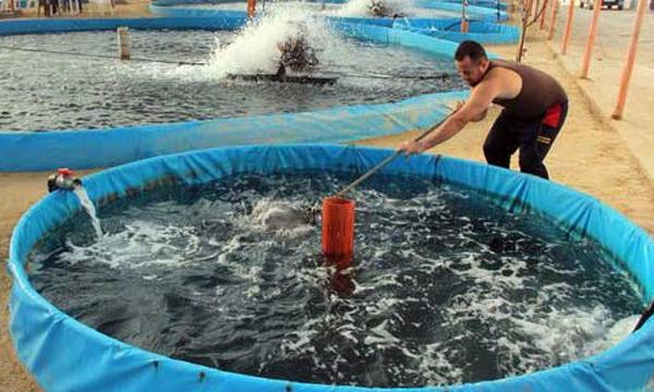 Tips Sukses Budidaya Ikan Koi di Kolam Terpal
