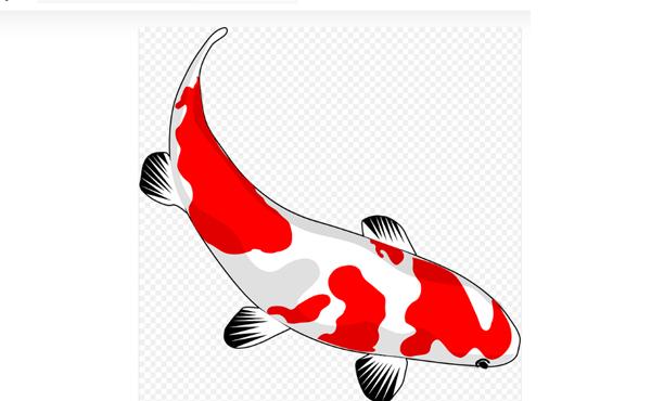 Jual beli ikan koi online