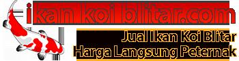 Jual Ikan Koi Blitar Super Murah, Harga Langsung Peternak | IkanKoiBlitar.com